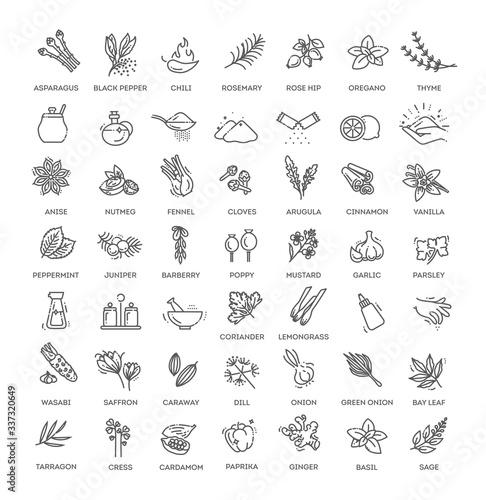 Obraz Condiment icons set. Outline set of condiment vector icons - fototapety do salonu