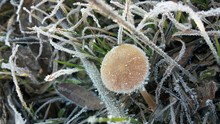 Close-up Of Mushroom On Snow Covered Plant