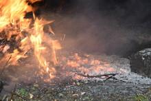 Bonfire. Burning Tree Branches...