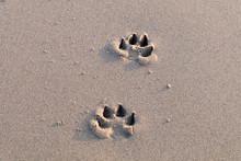 High Angle View Of Paw Prints On Sand