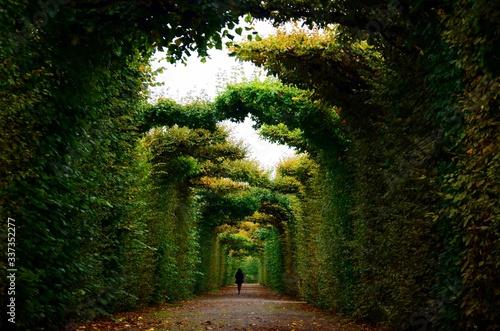 Fotografie, Tablou Walkway Amidst Trees In Forest