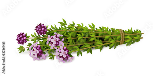 Fotografie, Obraz Bouquet of fresh thyme with flowers isolated on white background