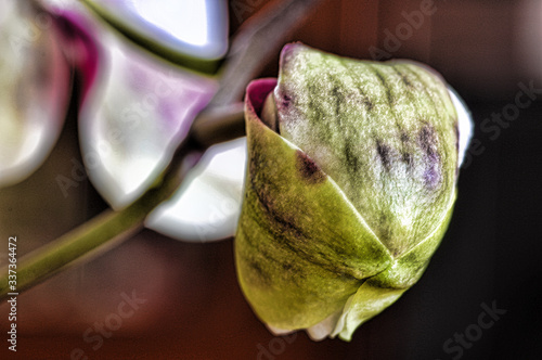 Photo orchid macro shoot in hdr with pentax k3 and  smc PENTAX-D FA MACRO 100mmF2