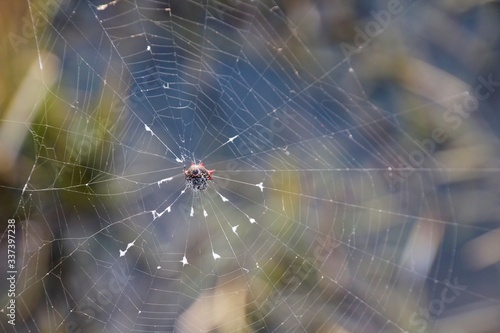 Tablou Canvas Close-up Of Spider On Web