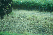 Green Grass On Floor In Garden Background With Copy Space