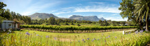Panorama Of A Wine Producer In South Africa With Table Mountain And Clear Blue Sky, Cape Town. South Africa 2009