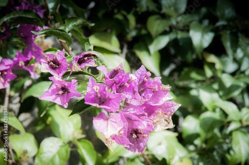 Fototapeta zdjęcie przedstawiające kwiaty rosnące w ogrodzie w górach Hiszpanii  w słońcu wiosną obraz