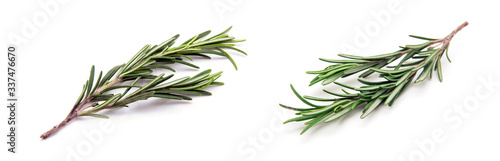 Fotografia Twig of rosemary on a white background