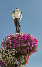 Lamp Post Flowers