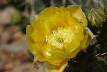 Close Up Of A Beautiful Yellow...