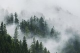 Panoramic View Of Trees In Forest During Foggy Weather - 337494056