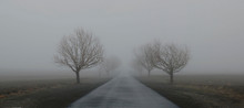 Bare Trees On Road Against Sky