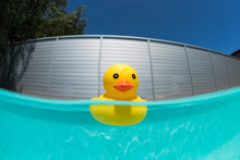 Floating Rubber Duck In The Swimming Pool