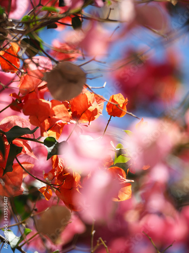 Low Angle View Of Pink Flowers On Tree #337554417