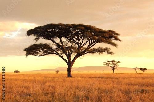 Bare Tree On Field Against Sky - fototapety na wymiar