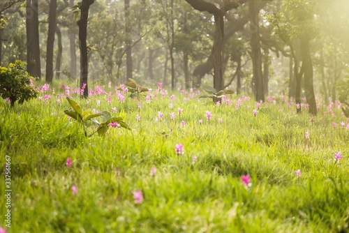 Fototapeta Close-up Of Flowers Growing In Meadow obraz na płótnie