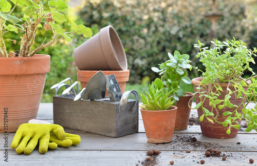 gardening equipment among plant in flower pot on a table in garden