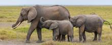 An Elephant Family Walking In ...