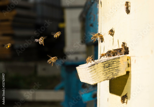 Obraz Bees entering the hive - fototapety do salonu