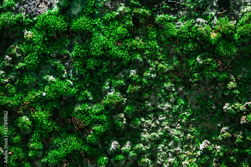 Fototapety, obrazy: Full Frame Shot Of Plants Growing In Forest