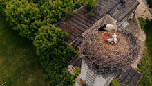 Stork With Chicks On The Nest Made On The Chimney Of An Old Village House.