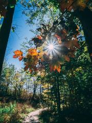 Obraz na płótnie Canvas Low Angle View Of Flower Trees Against Bright Sun