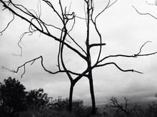 Bare Branches Against Sky