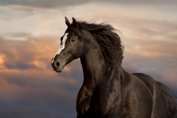 Black horse portrait against blue sky