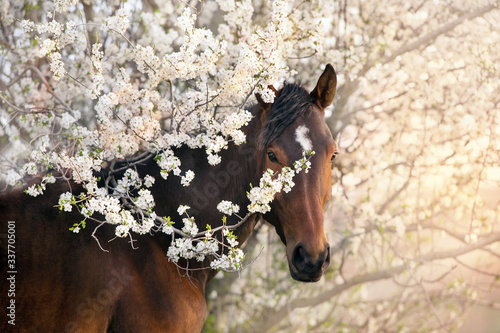 Fotografia, Obraz Bay stallion portrait on spring blossom tree