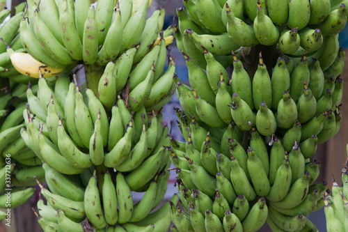 Raw bananas have a green color, astringent flavor, waiting to be yellow so can Wallpaper Mural