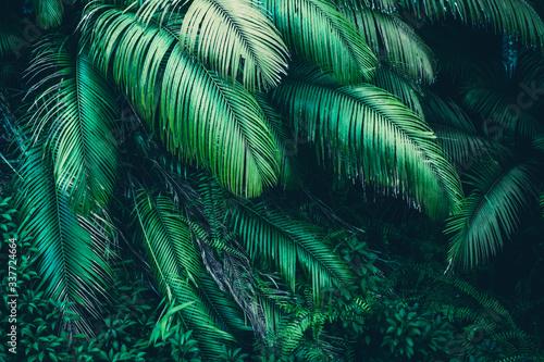 Naklejka premium natura tło zielonego lasu, las tropikalny