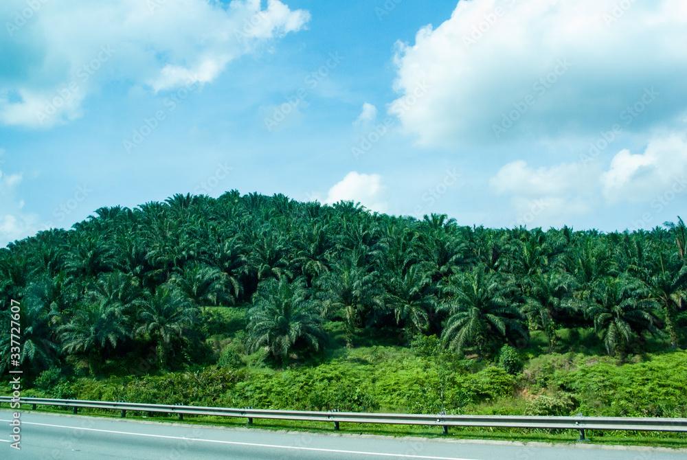 Fototapeta 東南アジアの長距離バスの車窓:マレーシア