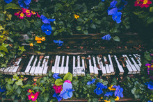 High Angle View Of Flowers And Leaves On Abandoned Piano
