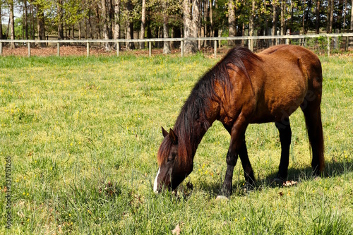 Brown Horse Eating in Pasture