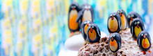 Stone Penguins  Colony On The ...