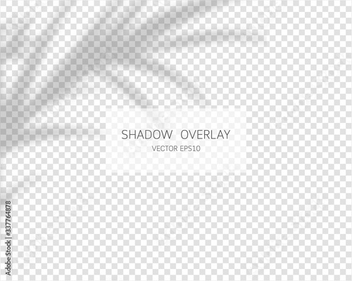 Obraz Shadow overlay effect. Natural shadows isolated on transparent background. Vector illustration.  - fototapety do salonu