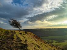 A Windswept And Twisted Hawtho...