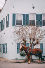 Brown Horse Pulling Carriage In Front Of Blue House In Charleston South Carolina
