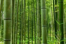 Bamboo Forest Pattern. Arashiy...