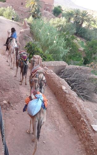 Fotografie, Obraz Merchant with camels