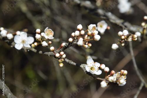 Photo Tempo di primavera, rami dei alberi fioriti