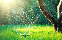 Garden, Grass Watering. Smart Garden Activated With Full Automatic Sprinkler Irrigation System Working In A Green Park, Watering Lawn, Flowers And Trees. Sprinkler Head Watering. Gardening Concept.