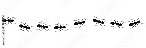 Line of working ants vector illustration isolated on white Canvas Print