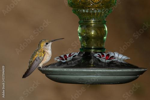 Valokuva hummingbird feeding on feeder
