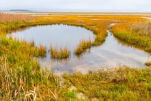 Open Salt Marsh In Reheboth Bay From Burton Island, Delaware Seashore State Park, Delaware, USA