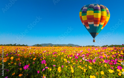 Vászonkép Beautiful colors of the hot air balloons flying on the cosmos flower field