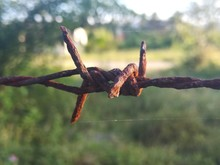 Close-up Of Rusty Barbed Wire