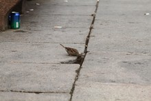 Sparrows On The Street