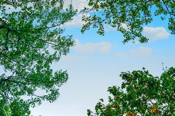 FototapetaCielo azul y verde naturaleza