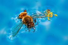 Floating Bee, Dijon, France, J...